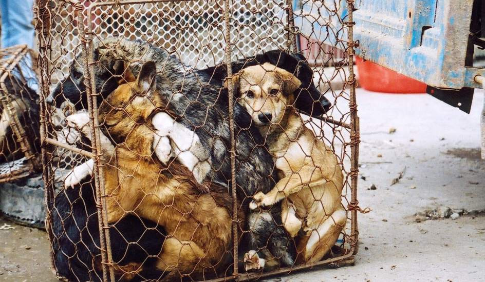 Китайская бесчеловечность